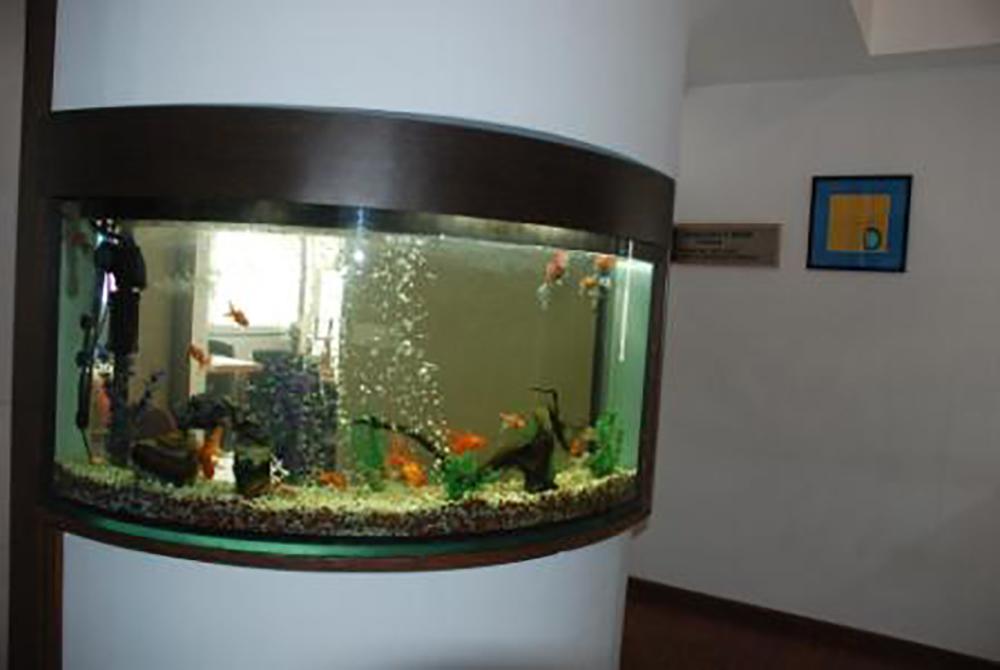 Large Aquariums Large Aquariums Supplier In Ahmedabad India