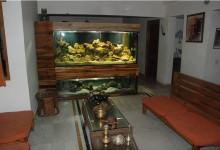 Home Aquarium pic