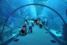 Tunnel shaped large public aquarium at Dubai Mall.